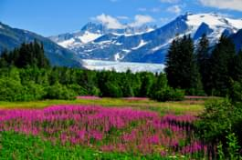 Gezicht op de Mendenhall Gletsjer, Alaska