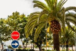 Speedlimit Majorca