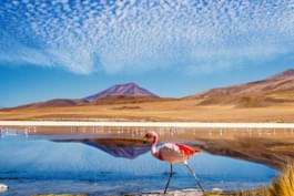 Watch flamingos in Bolivia