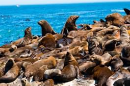 Isla de las focas Isla Duiker en Ciudad del Cabo