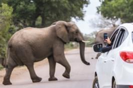 éléphant voiture de location afrique du sud