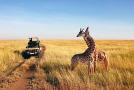 Watch wild animals during a safari in Tanzania