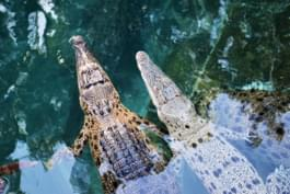 Coccodrilli nella Grotta del Crocosauro