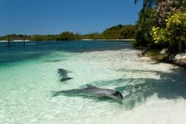 Dolphins in Varadero