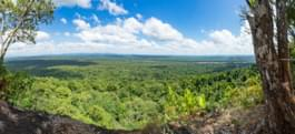 Top view over Guyana's rainforest