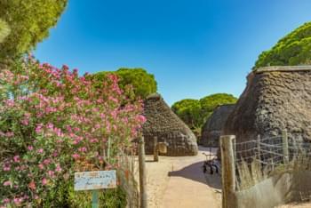 Donana National park Seville