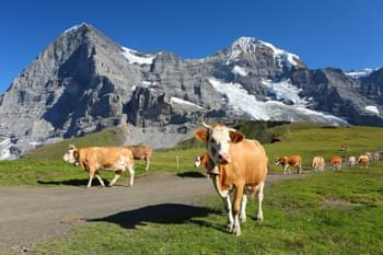 Discover the Swiss Alps independently