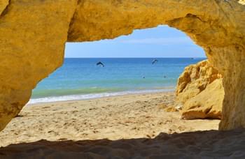 Delfine Portugal