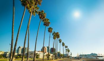 Palmen in Los Angeles