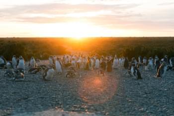 Pinguine am Strand Cabo Vírgenes, Argentinien