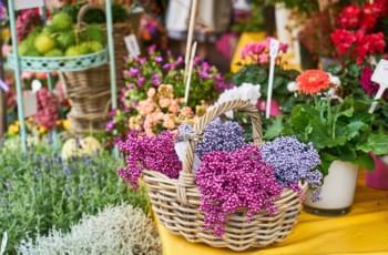Viktualienmarkt in München besuchen