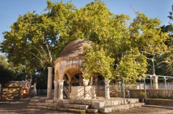 Plataneros (sicomore) en Brunnen