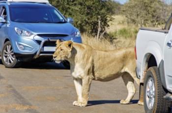 Mietwagen Südafrika