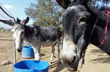 Altersheim für Esel Kreta