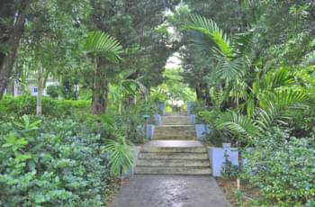 Gärten auf den Bahamas