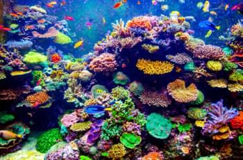 Korallen im Meer an der Küste