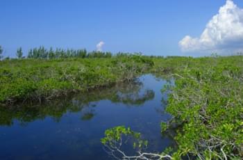 Lucian Nationalpark auf den Bahamas