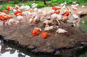 Flamencos en el Zoo Hellabrunn en Múnich