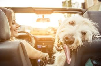 Frau und Hund im Cabrio