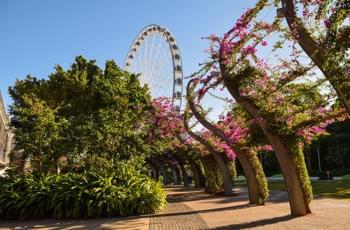 Entspannen am Southbank von Brisbane