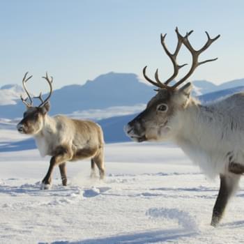 Mietwagenrundreise Norwegen: Ein winterlicher Frühling