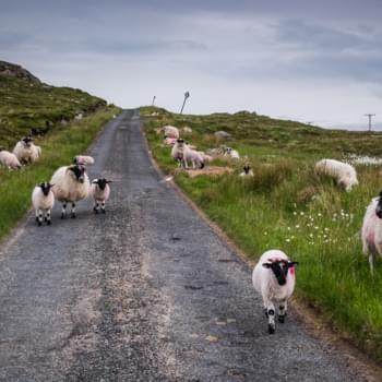Roadtrip Schottland: Eine Reise mit Hindernissen