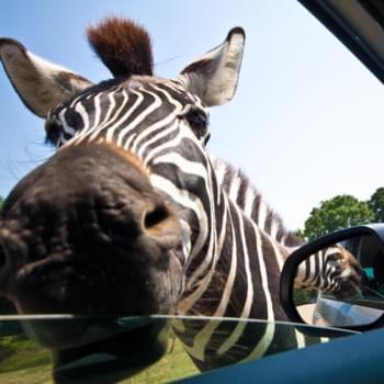 Mietwagenrundreise Südafrika: Atemberaubende Natur und wilde Tiere