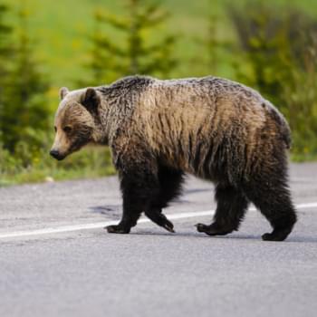 Mietwagenreise Kanada: Abenteuer Natur und unendliche Weite