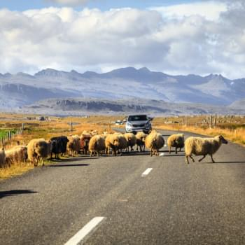Mietwagen Island: Tipps gegen Kostenfallen