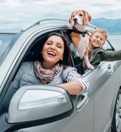 Hunde im Mietwagen: Was ist erlaubt?
