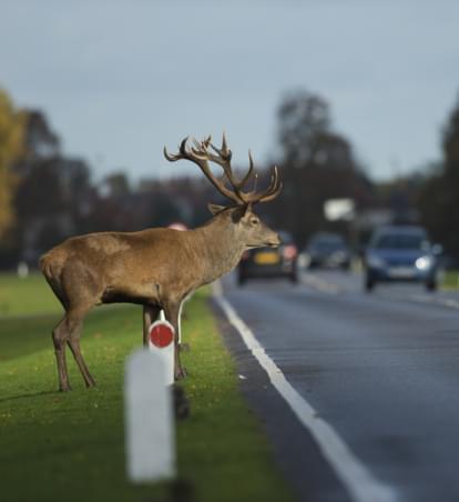 Mehr Sicherheit für Bambi & Co: Vorsicht im Herbst
