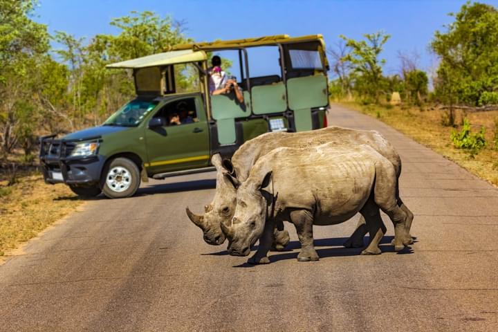 Rhinocéros dans le parc national de Kruger