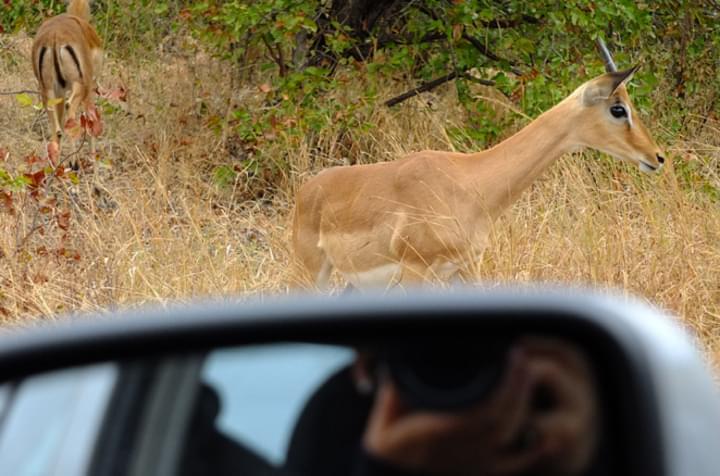Safari mit dem Mietwagen