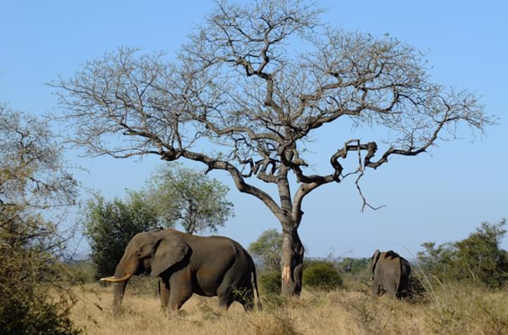 Pures Safari-Erleben