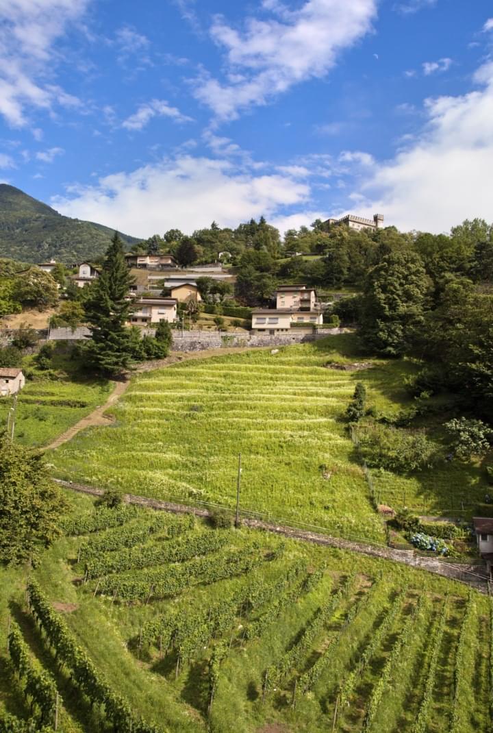 Weinlandschaft in Mendrisio