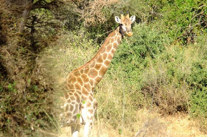 Auf Safari mit dem Mietwagen
