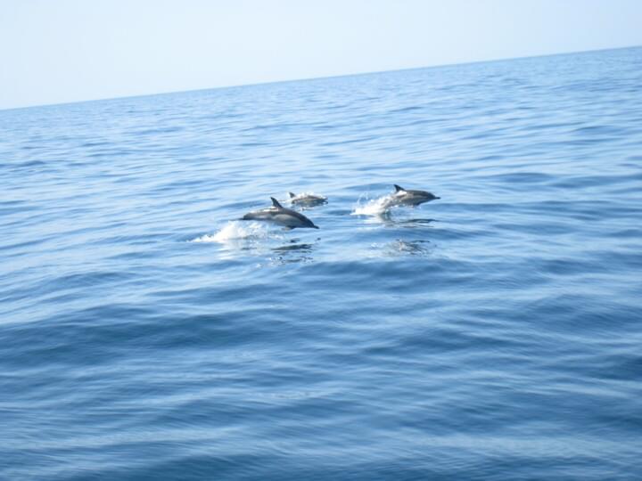 Delfine bei Lagos
