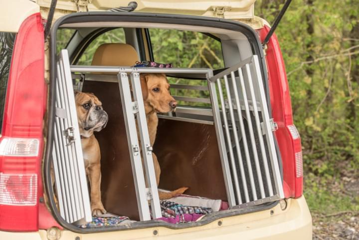 Hunde im Mietwagen Transport in einer Box.