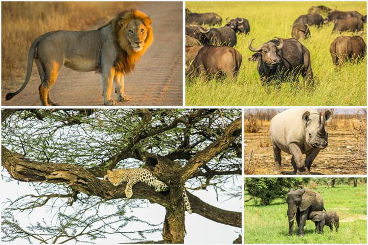 In the footsteps of the Big 5