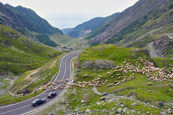 Schafe auf einer Straße in Irland