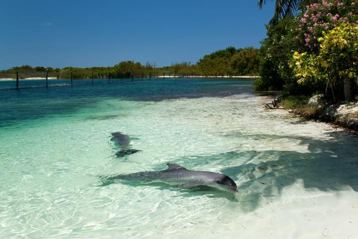Delfines en Varadero, Cuba