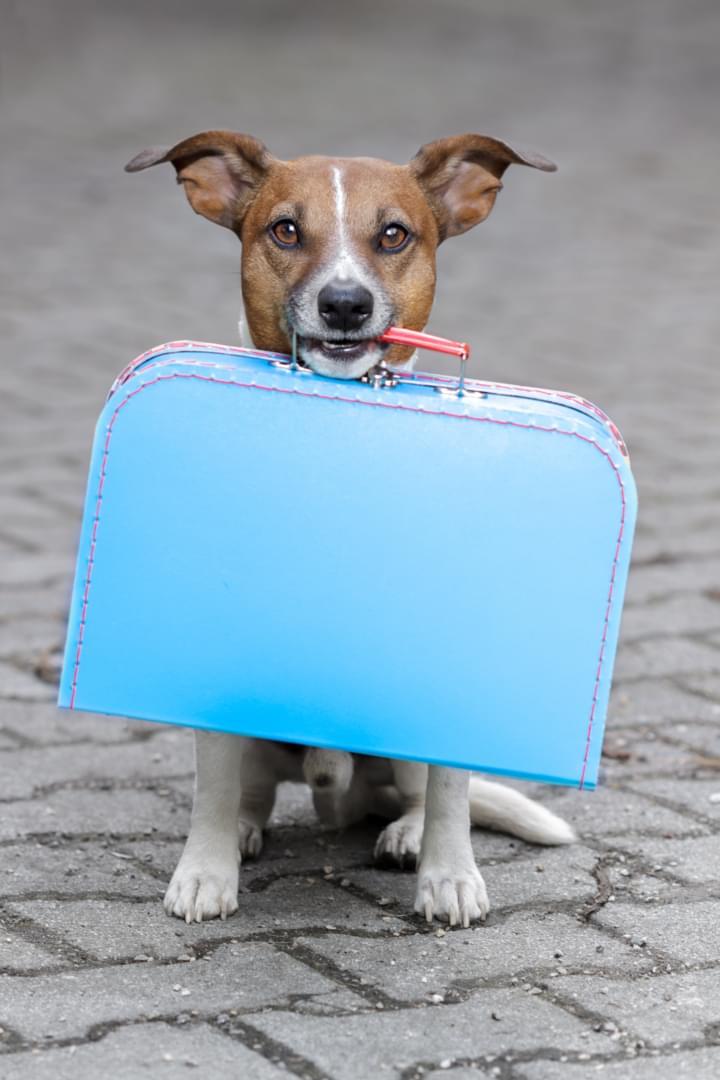 EU-Einreisebestimmungen für Hunde.