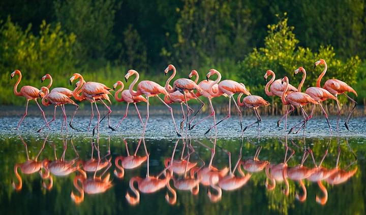 Flamingos in a National Park