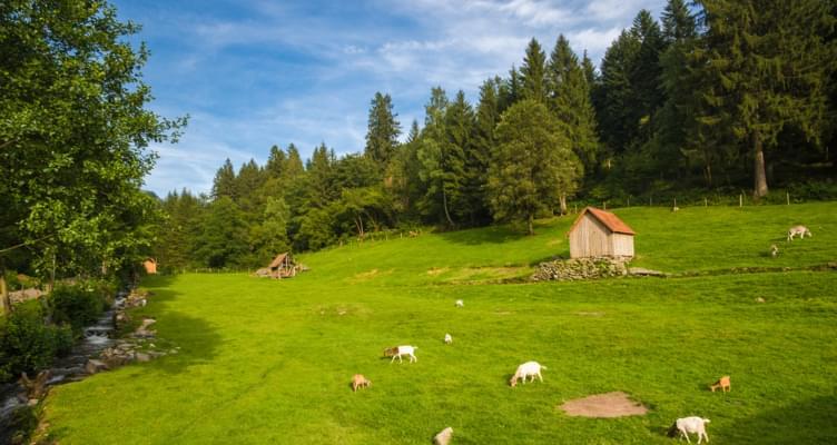 Mietwagen Spritztour Schwarzwald: Das idyllische Murgtal