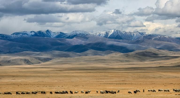 Rental Car Mongolia